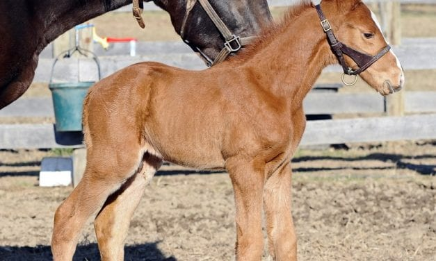 First foal of Long River arrives