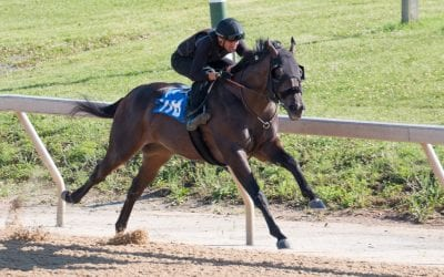 Fasig-Tipton: Solid sale despite uncertainty
