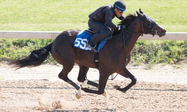 Fasig-Tipton: Tracking our hips to watch