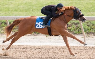 Fasig-Tipton: 2yo sale surpasses $23 million