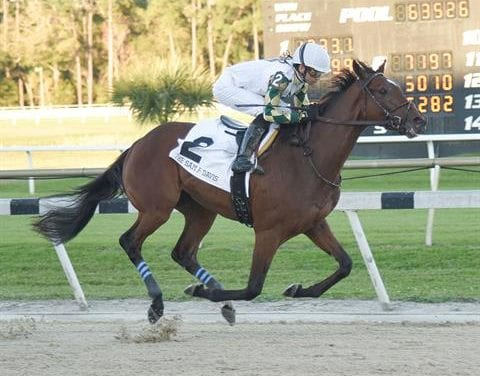Sole Volante leads Belmont Stakes challengers
