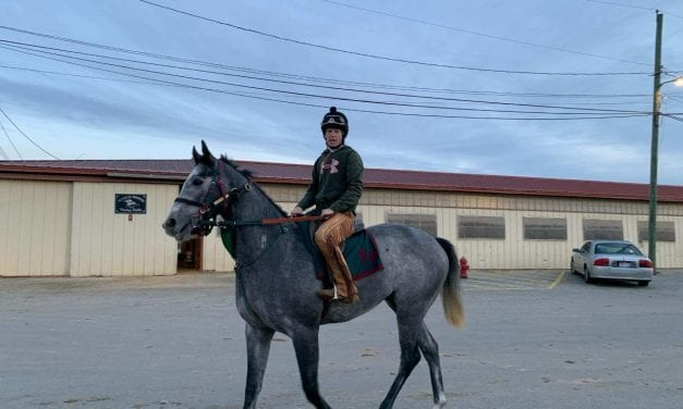 "Kristy Petty: 2yo Juba geldings ""making me look good"""
