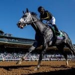 Knicks Go named Md-bred Horse of the Year