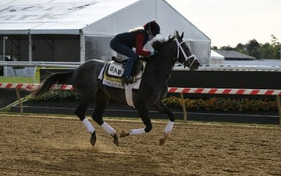 Our experts pick the Preakness