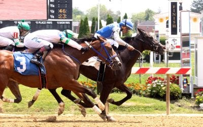 Md Million: New sires hoping for fast starts