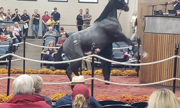 Fasig-Tipton sale concludes with strong gains