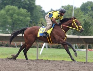 Haskell contender Wildcat Red works on Sunday morning. Photo By Bill Denver/EQUI-PHOTO.Photo By Bill Denver/EQUI-PHOTO.