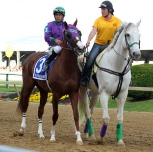 California Chrome with Victor Espinoza up and Gray Horse, with Jessica Lindsey. Photo by Laurie Asseo.