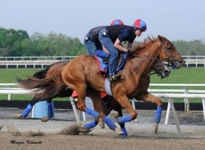 Ring Weekend gallops at Fair Hill.  Photo by Maggie Kimmitt, Herringswell Stables.