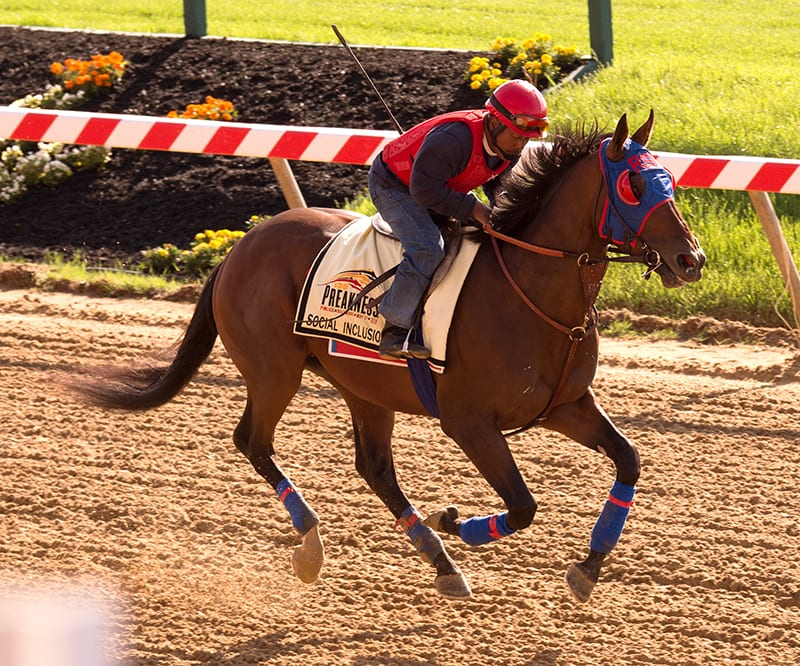 Preakness notes for May 11: 'Chrome' a 'rock star'