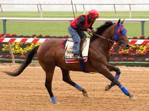 Social Inclusion on the track at Pimlico.  Photo by Jim McCue, Maryland Jockey Club.